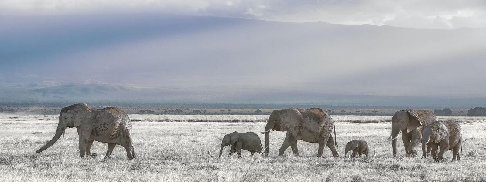 Amboseli-1600-x-600_SFW