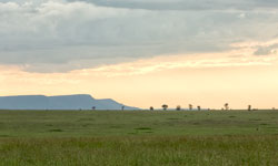 _MG_0276_Serengeti-250x150_SFW-copy