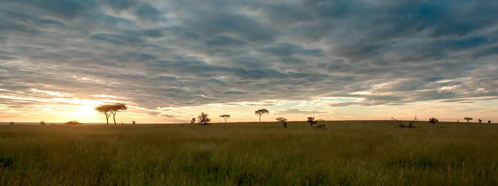 Srengeti-1600-x-600_SFW