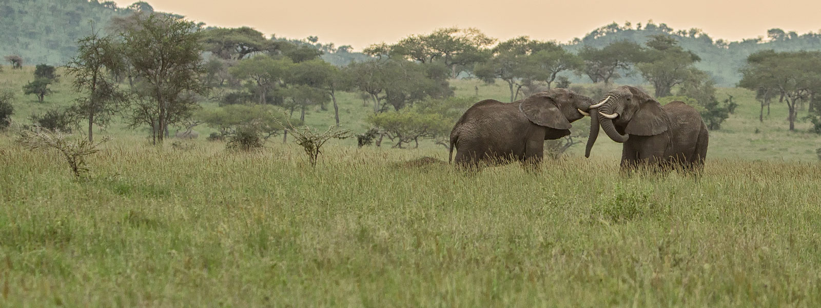 MG_0284-Elephants_1600x600_SFW-copy